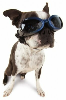 hundebrille-1
