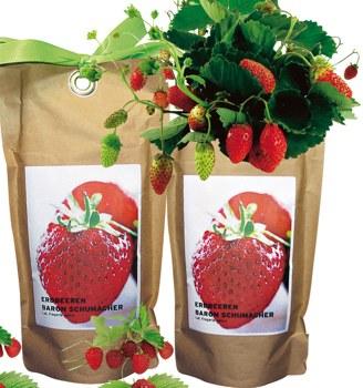 Erdbeeren aus der Tuete