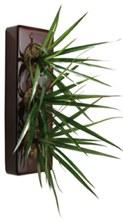 flowerbox echte pflanzen an die wand h ngen wie bilder. Black Bedroom Furniture Sets. Home Design Ideas