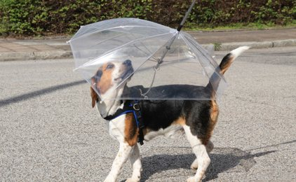 Hunderegenschirm - So bleibt auch der Vierbeiner trocken