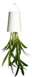 Hängender Blumentopf - Pflanzendeko mal anders!