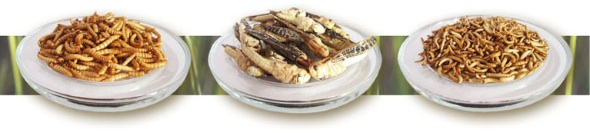 Snack-Insects_1